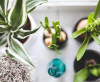 Des plantes à l'intérieur
