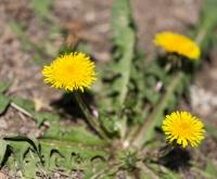 Combattre les mauvaises herbes avec Ultima PRO