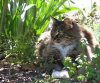 Bescherm je huis en tuin tegen katten
