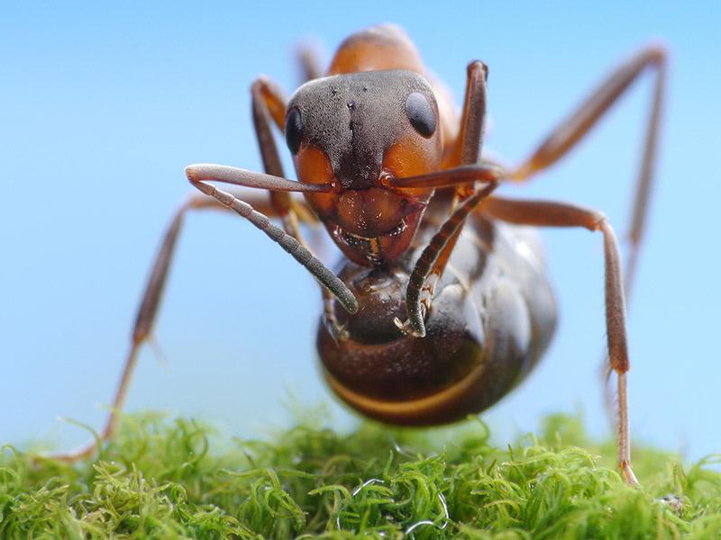 Mieren effectief verdelgen en verwijderen