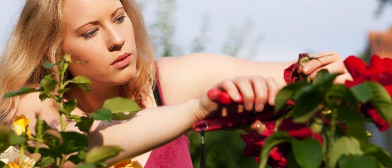 Een ecologische en bloeiende siertuin