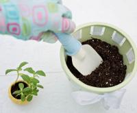 verplanten in grotere pot
