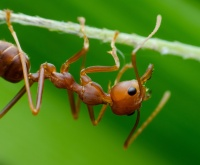 Aaltjes tegen mieren